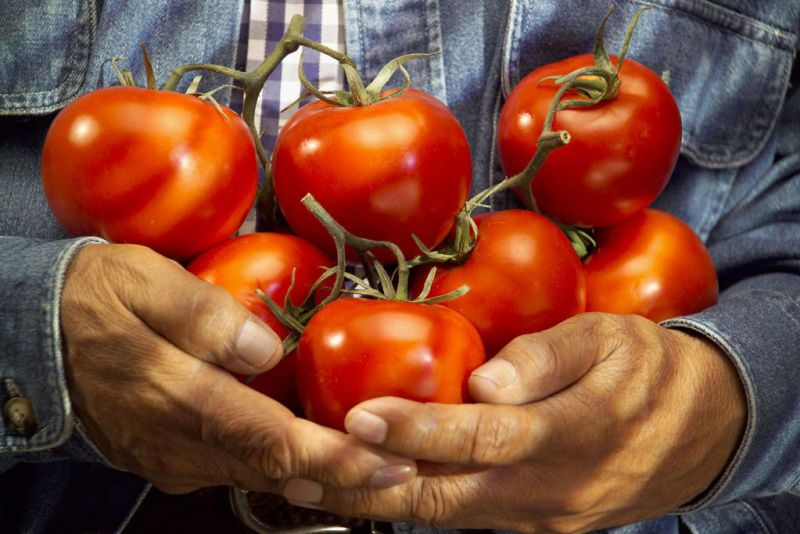 ABC de temporada - abc_food_vegetable_tomato