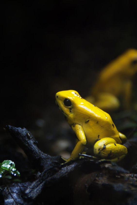 Los animales más peligrosos del mundo - frog