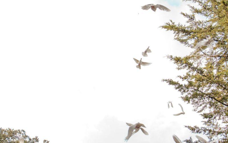 Descanso Eterno en el bosque. - birds