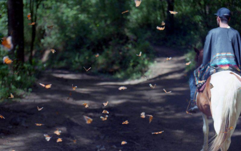 El efecto mariposa, monarcas sin corona, pero con mucho poder. - caballo-y-mariposas