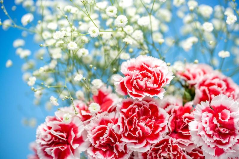 Día de las Madres alrededor del mundo - image-result-for-claveles-japon
