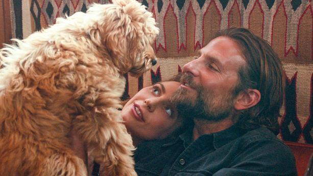 Datos que probablemente no sabías de la película A Star Is Born - a-star-is-born-cooper-y-gaga-con-perro