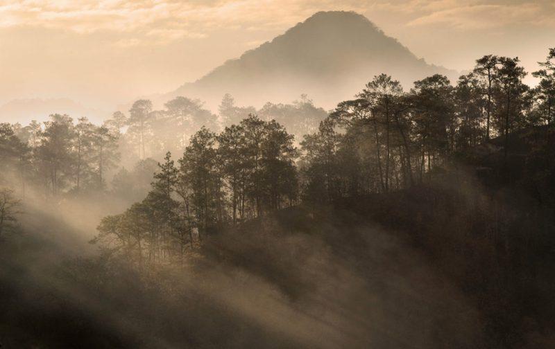 Conservation International, a favor de la naturaleza - portada-naturaleza-bosque-atardecer