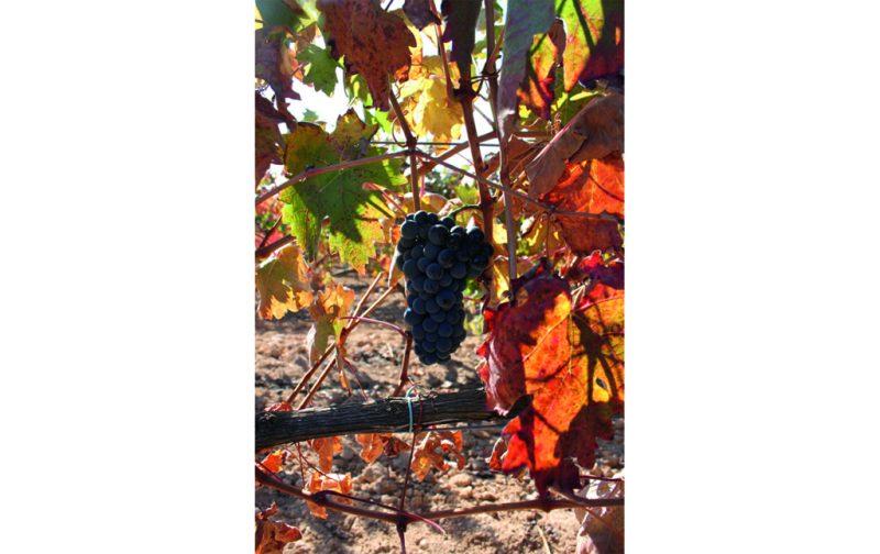 Bodegas Emilio Moro, tres generaciones de tradición vinícola - bodegas-emilio-moro-2