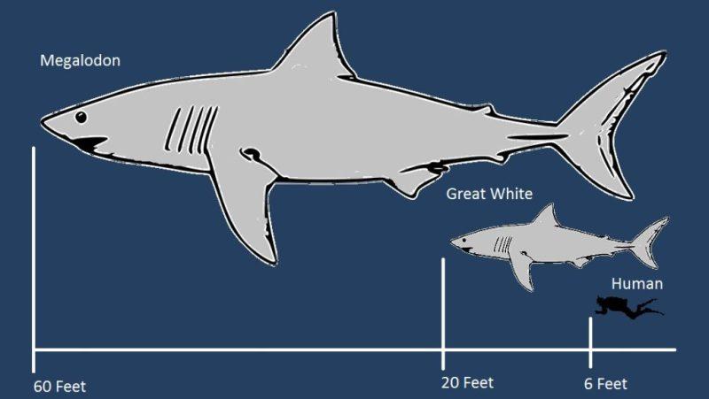 Datos que probablemente no sabías sobre los tiburones - datos-que-probablemente-no-sabias-sobre-los-tiburones-4