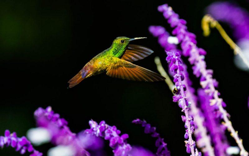 Diego Rodríguez: el fotógrafo que captura momentos en la naturaleza - colibri-colores-flores-colores