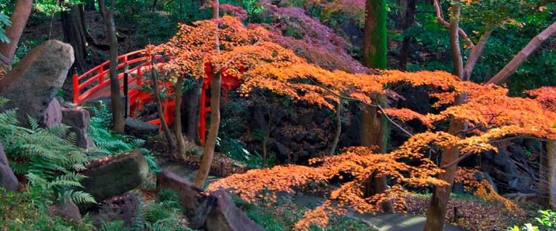 Los jardines botánicos más bonitos del mundo - koishikawa-korakuen-gardens-tokio