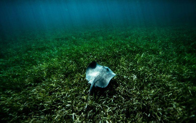 Diego Rodríguez: el fotógrafo que captura momentos en la naturaleza - mantarraya-mar-agua
