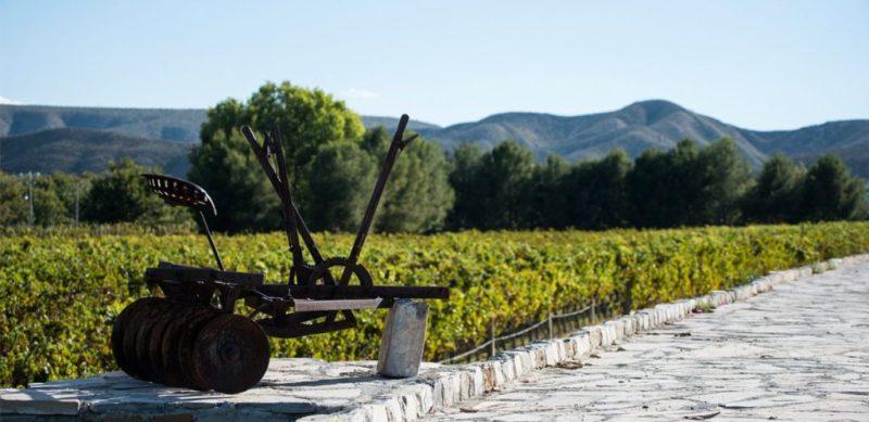 Los mejores viñedos de México - vincc83edos_riverogonzales