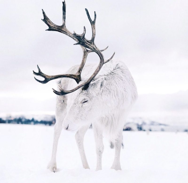 5 impresionantes experiencias que tienes que vivir en Noruega - noruega-actividades-3