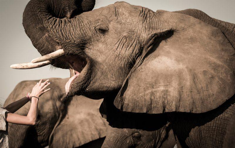 Un recorrido por África - abucamp-botswana-elefante-selva