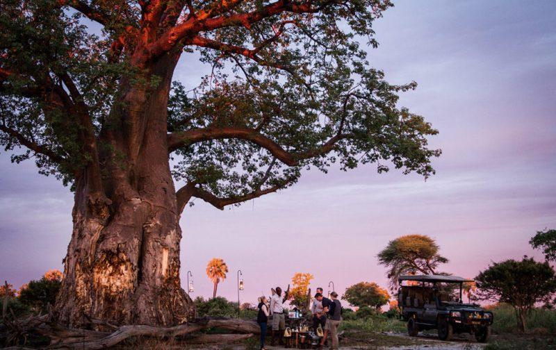Un recorrido por África - amanecer-en-mombo-africa-safari-arbol