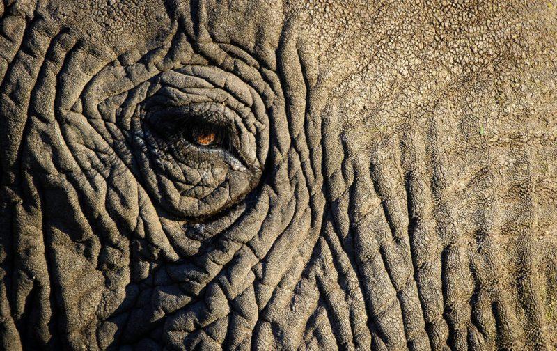 Un recorrido por África - close-up-elefante-ojo-animal-selva