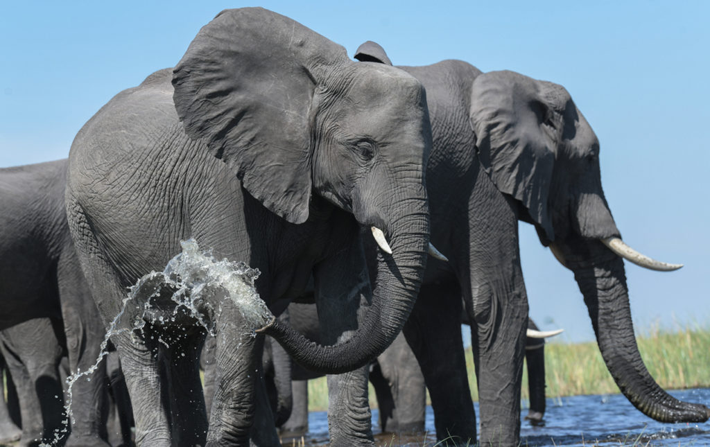 Un recorrido por África - elefantes baño agua
