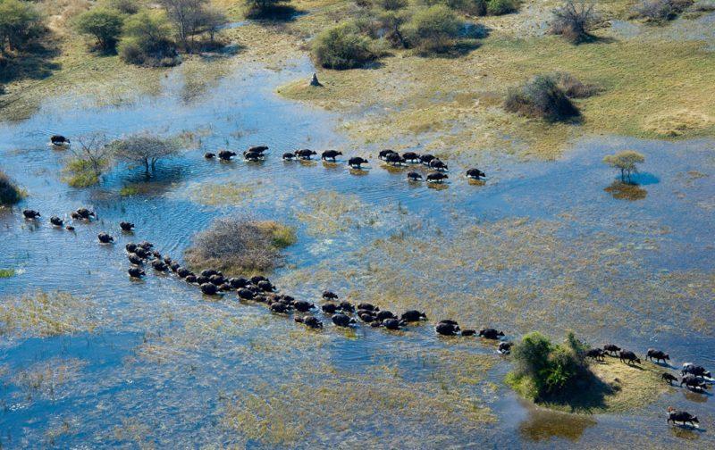 Un recorrido por África - kwedi-africa-manada-bufalos