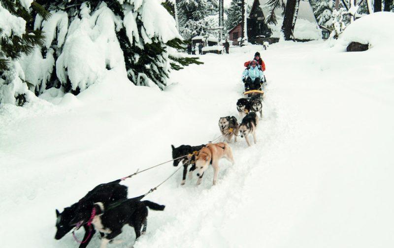 De Ushuaia a Las Leñas. Guía completa para esquiar en Argentina - ushuaia-7