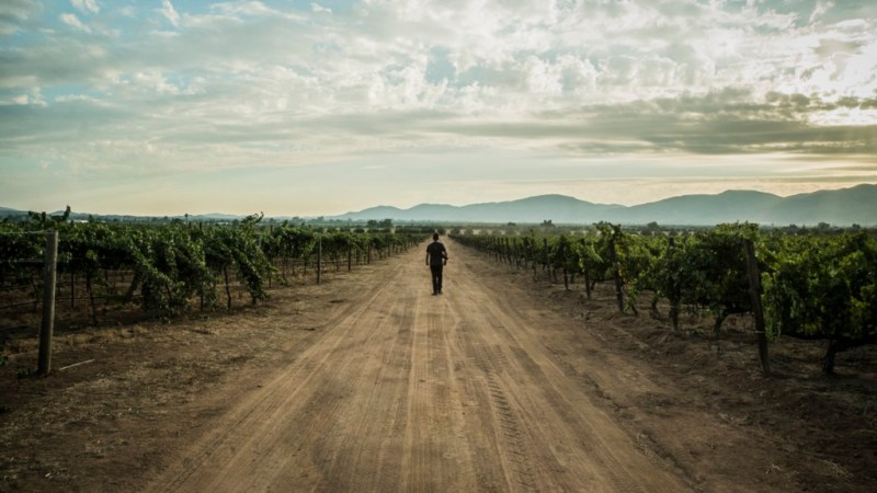Guadalupe Valley Wine, Food & Music Festival, listo para celebrar su cuarta edición - 2-gvf