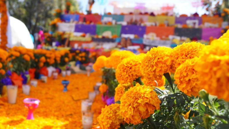 Tradiciones mexicanas para festejar el Día de Muertos - flor-de-cempacuchil-halloween