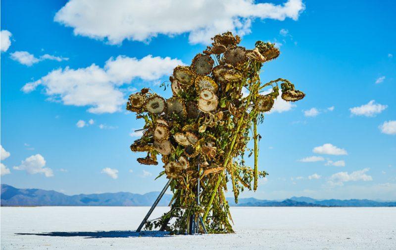 La elegancia exótica de Azuma Makoto - hotbook_azumamakoto_arte_instalacion_escultura_plantas_paisaje_cielo_azul_argentina