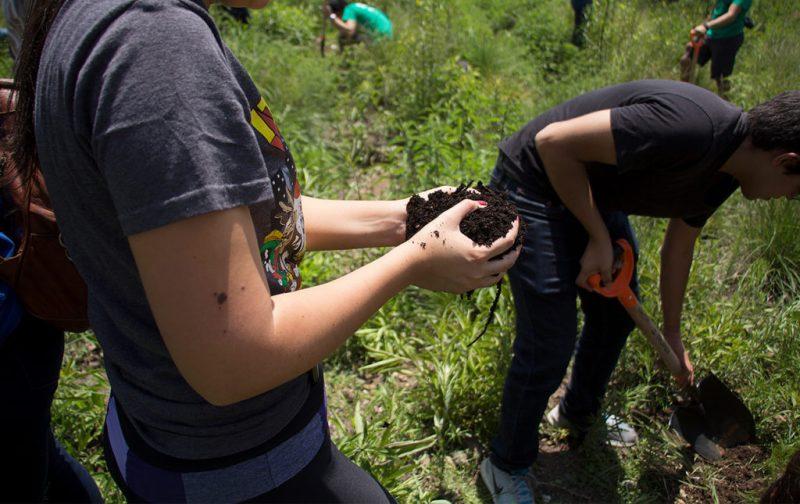 Cómo llevar a cabo una reforestación exitosa - hotbook_ectagono_reforestacion_manos_tierra_trabajo_plantando