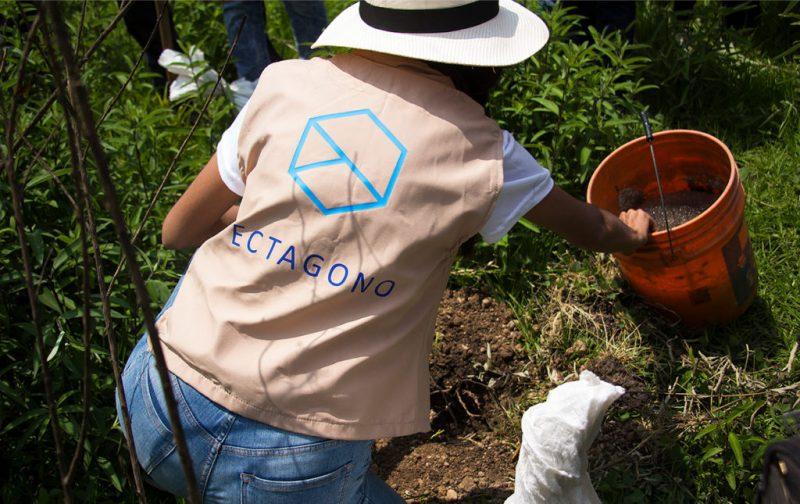 Cómo llevar a cabo una reforestación exitosa - hotbook_ectagono_reforestacion_naturaleza_plantando_persona