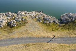 Pescado de Moctezuma, la carrera de relevos más antigua de la historia - pescado de moctezuma portada