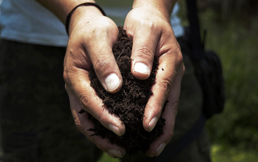 Cómo llevar a cabo una reforestación exitosa - PORTADA_hotbook_ectagono_reforestacion_manos_tierra