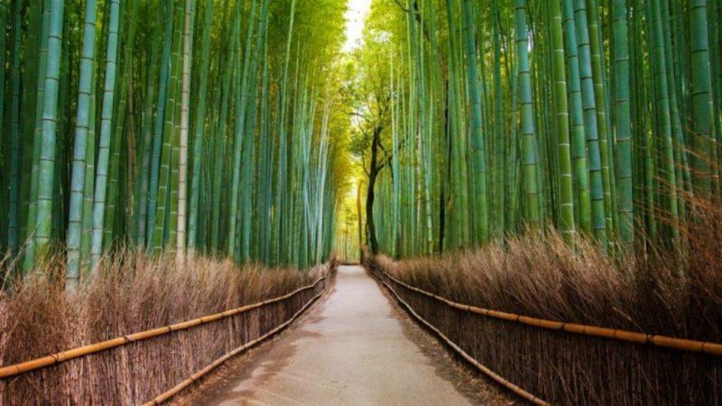 24 fotos que te transportarán a lugares inimaginables - bosque-de-bambu-kyoto-fotos-de-lugares-inimaginables-que-te-transportaran-virtualmente-coronavirus-internet-fotos-12
