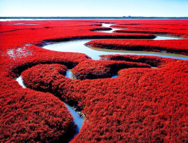 24 fotos que te transportarán a lugares inimaginables - la-playa-roja-china-fotos-de-lugares-inimaginables-que-te-transportaran-virtualmente-coronavirus-internet-fotos-14