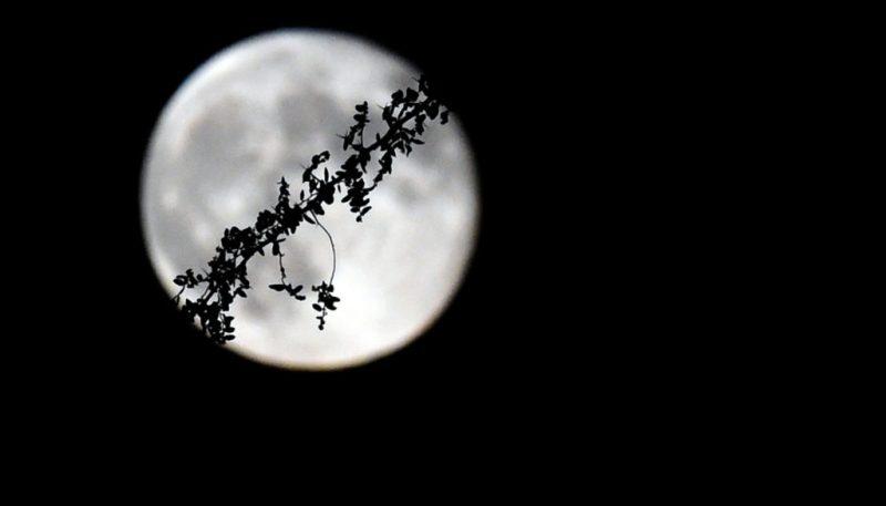 Luna de flores: hoy podrás enamorarte de la luna más brillante del 2020 - luna-de-flores-hoy-podras-enamorarte-de-la-luna-mas-brillante-del-2020-1