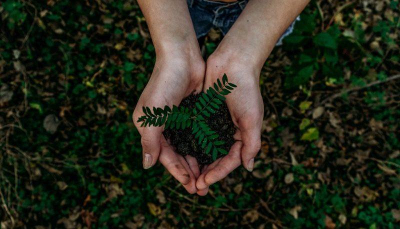 ¿Cómo vincularte otra vez con la naturaleza? - ecolana-3