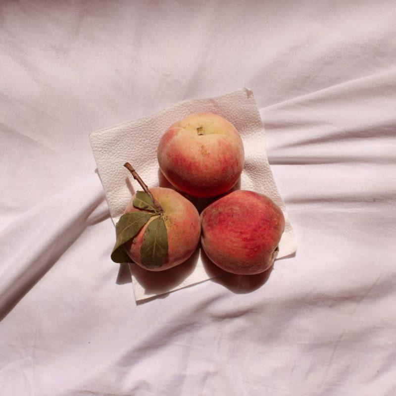HOT Color: Peach! 20 fotos de color durazno que te transmitirán paz - hot-color-peach-20-fotos-de-color-durazno-que-te-transmitiran-paz-fotografia-google-verano-viajes-summer-animales-en-peligro-de-extincion-google-tendencia-coronavirus-6