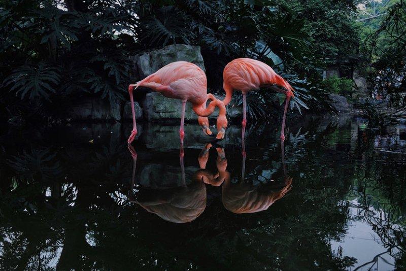 10 fotos tomadas con iPhone que han ganado premios - 08-2nd-animals-ji-li-resized