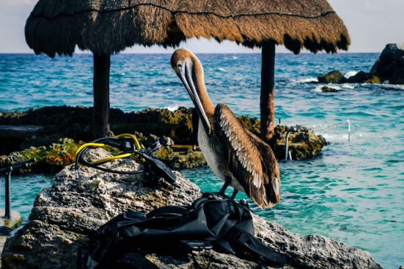 Los destinos más llamativos para volver a visitar en México - los-destinos-mas-llamativos-para-volver-a-visitar-en-mexico-viajar-mexico-cdmx-coronavirus-covid-19-viajes-nueva-normalidad-destino-a-donde-ir-donde-viajar-como-viajar-que-necesitas-para-v-1