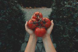Sitopia, cultivando tus propios alimentos en casa - clay-banks-s-hw64ghWEA-unsplash