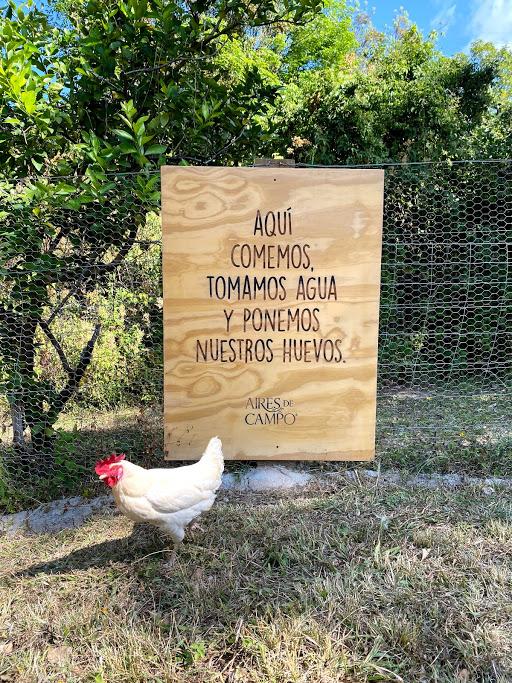 Vive una experiencia orgánica y natural con Aires de Campo en Pipiol - img_4015
