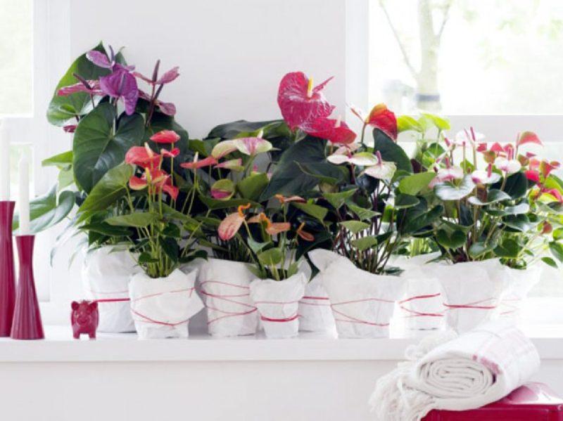 Go green! Plantas para tener un imperdible jardín interior - link-anturio-plantas-para-tener-un-imperdible-jardin-interior