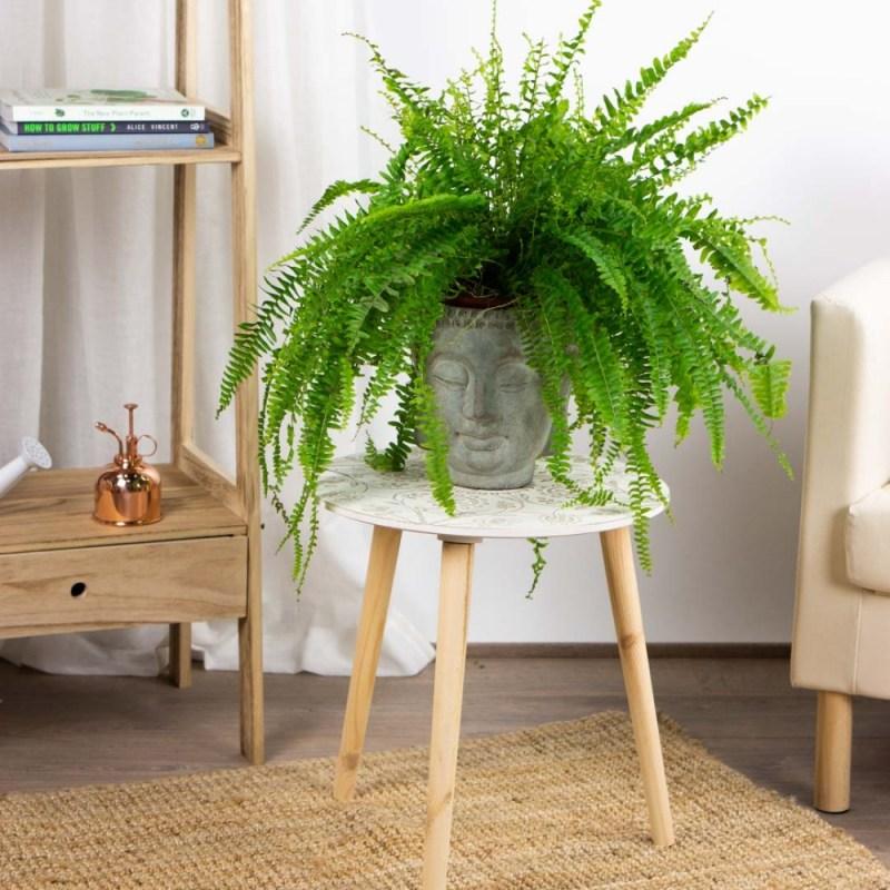 Go green! Plantas para tener un imperdible jardín interior - link-helecho-plantas-para-tener-un-imperdible-jardin-interior