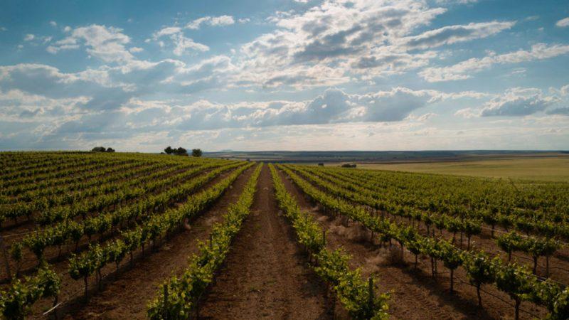 Un vino con las calificaciones más altas: Martúe llega a México - un-vino-con-las-calificaciones-mas-altas-martue-llega-a-mexico-isela-atletico-de-madrid-2