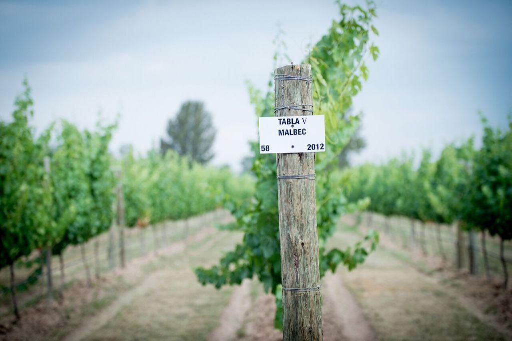 Born to be Wine: el festival del vino