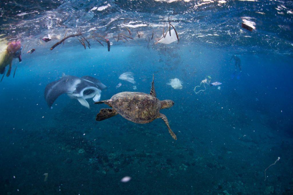 El problema de la basura en los océanos