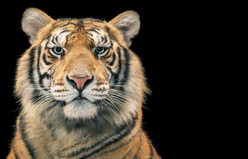 Tim Flach, el fotógrafo que crea conciencia sobre las especies en peligro de extinción