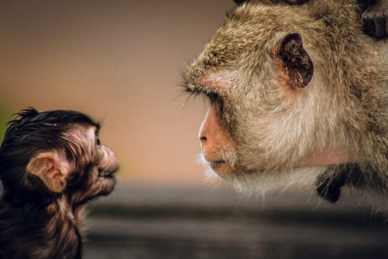 15 fotos que representan el cariño de mamá en la naturaleza - foto-chango-fotos-que-representan-el-carincc83o-de-mama-en-la-naturaleza-zoom-dia-de-las-madres-10-de-mayo-coronavirus
