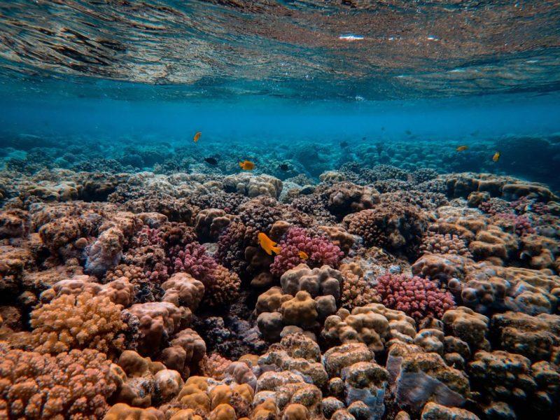 20 fotografías que te harán enamorarte del océano - fotografias-que-te-haran-enamorarte-del-oceano-google-fotos-google-zoom-online-google-meet-instagram-naturaleza-animales-en-peligro-de-extincion-oceano-cuidado-por-el-oce-11
