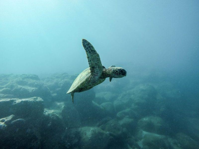 20 fotografías que te harán enamorarte del océano - fotografias-que-te-haran-enamorarte-del-oceano-google-fotos-google-zoom-online-google-meet-instagram-naturaleza-animales-en-peligro-de-extincion-oceano-cuidado-por-el-oce-4