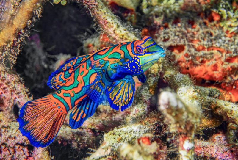 20 fotografías que te harán enamorarte del océano - fotografias-que-te-haran-enamorarte-del-oceano-google-fotos-google-zoom-online-google-meet-instagram-naturaleza-animales-en-peligro-de-extincion-oceano-cuidado-por-el-oce-7