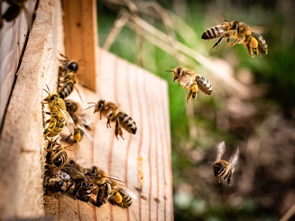 HOTBOOK Ecotalks x Tom's of Maine: la importancia de las abejas