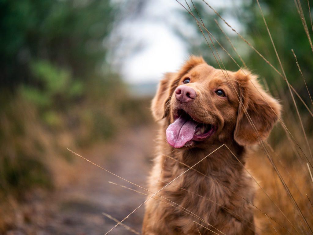 Recetas para consentir a tus mascotas