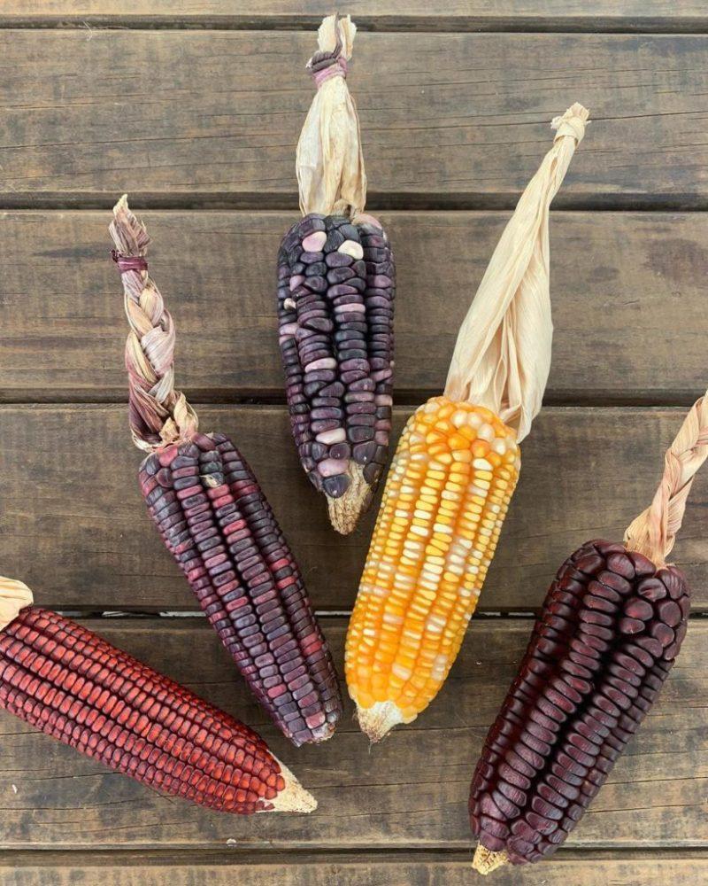 Sitopia, cultivando tus propios alimentos en casa - sitopia-2