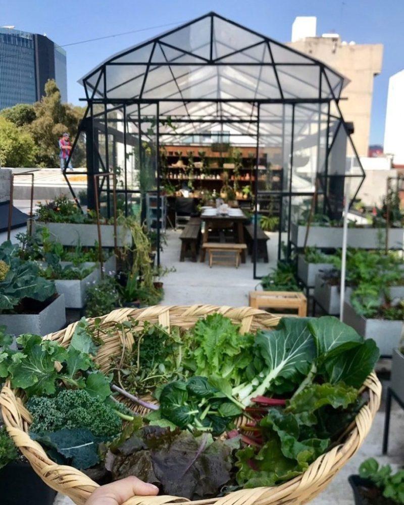 Sitopia, cultivando tus propios alimentos en casa - sitpia-3